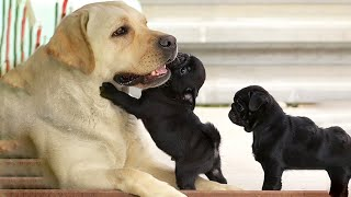AWW CUTE BABY ANIMALS Videos Compilation Funniest and cutest moments of animals  OMG So Cute #23
