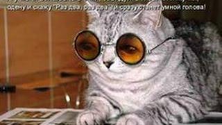 Прикольные видео котов смотреть