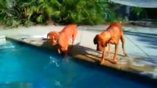Homem finge se afogar e cachorro tenta desesperadamente salva-lo! Vejam Só!