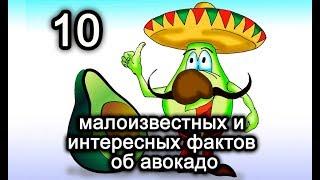 10 малоизвестных и интересных фактов об авокадо