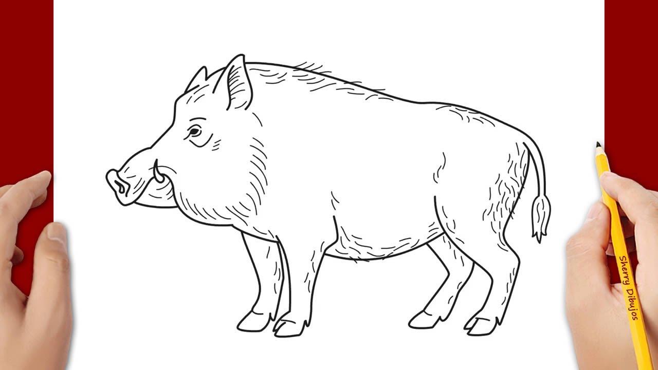 Cómo Dibujar Un Cerdo Salvaje Youtube