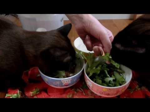 やっぱり野菜が大好きなパプとリカ