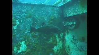 Creating Marine Habitat The Artificial Reef Part 1