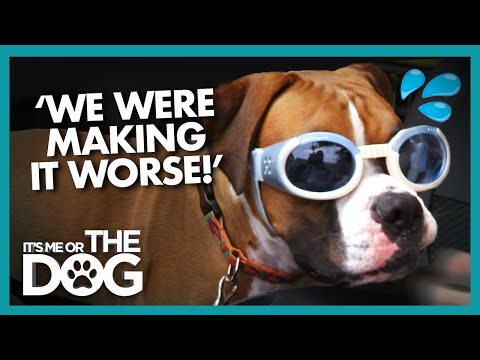 Is Doggy Daycare Making Dog's Anxiety Worse? | It's Me or the Dog