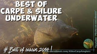 Pêche carpe et silure - saison 2014