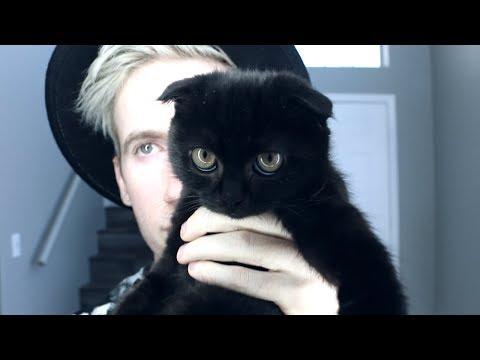 I Got A Kitten To Improve My Mental Health
