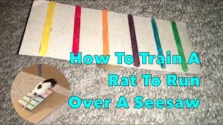 How To Train A Rat To Run Over A Seesaw