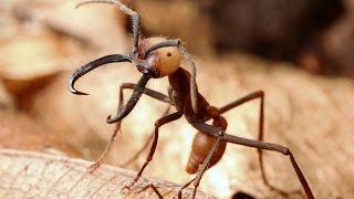 Самые опасные насекомые убийцы