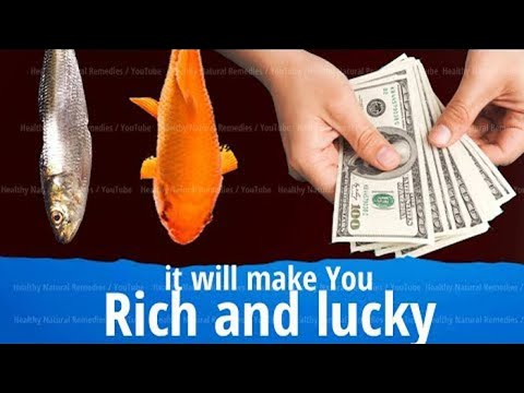 This Will Make You Rich And Lucky | Fish Aquarium Attracts Good Luck | Vastu Shastra, Feng Shui