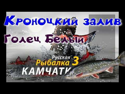 Кроноцкий залив/Голец белый/Редкие виды рыб/РР3 [ Русская рыбалка 3]