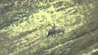 """""""Рев в горах"""" ч.3 Рев и поединок кавказских оленей, виды гор Алоус, Ятыргварта, Карапырь, Псеашхо"""