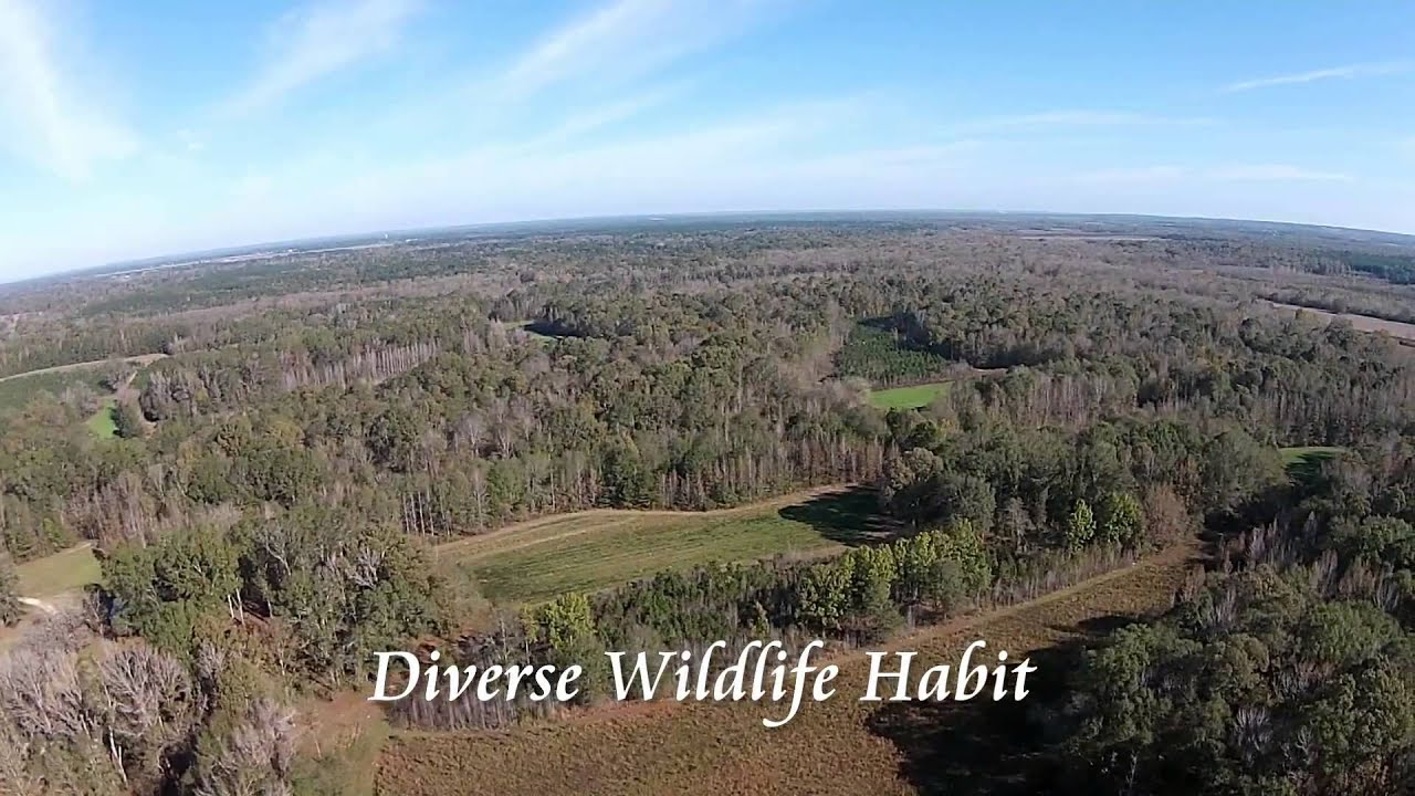 Land for Sale - Alabama - Lowndes County - Tutt Land Company - Panther  Creek Farm