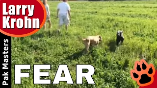 Socializing Fear Aggressive Dogs With Pakmasters Dog Training