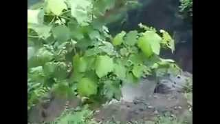 Patalpani Accident, Indore India   YouTube