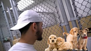 Visiting the Dog Pound!! Emotional*****