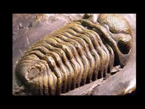 animales-prehistóricos-#4-el-trilobites