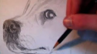 Drawing a Golden Retriever
