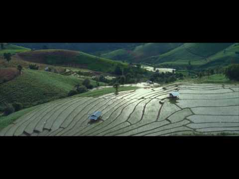 Rice Terraced Fields in Pha Pong Peang Chiang Mai, Thailand (4K)