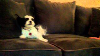 Download Video Mom vs DOG MP3 3GP MP4