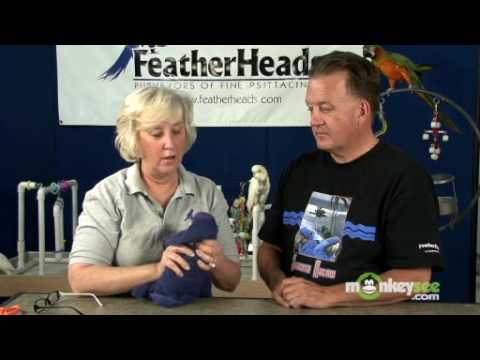 Bird Care – How to Clip Wings