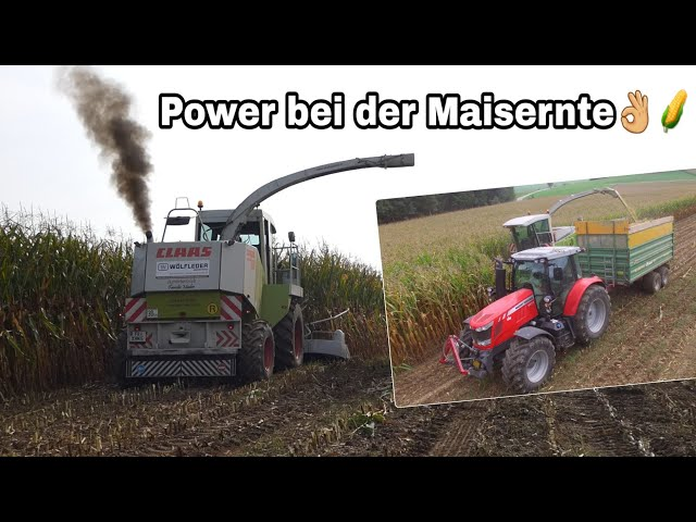 Maishäckseln 2018 | Pure Power von der Raubkatze! | Claas, MF, New Holland| Moareida Agrar