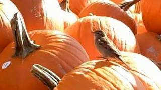 PUMPKINS - What do they Mean?