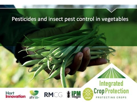 Pesticides and insect pest control in vegetables with Dr Siobhan de Little (webinar recording)