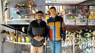 Love Birds Colony Breeding Progress I  Love Birds Colony l love Bird Colony Breeding Information