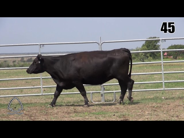 Pearcy Angus Ranch Lot 45
