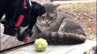 Funny Dogt and Cat Videos Compilation 2018