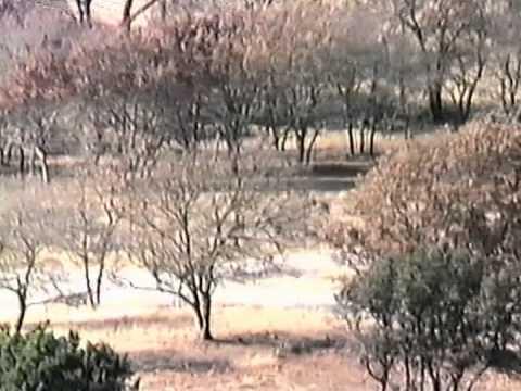 Fossil Rim 1986 Bubba Cheetahs
