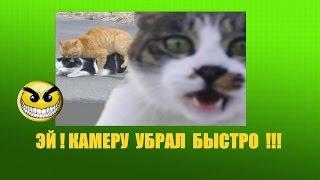 демотиваторы★ ПРИКОЛЫ С ДОМАШНИМИ И ДИКИМИ ЖИВОТНЫМИ !