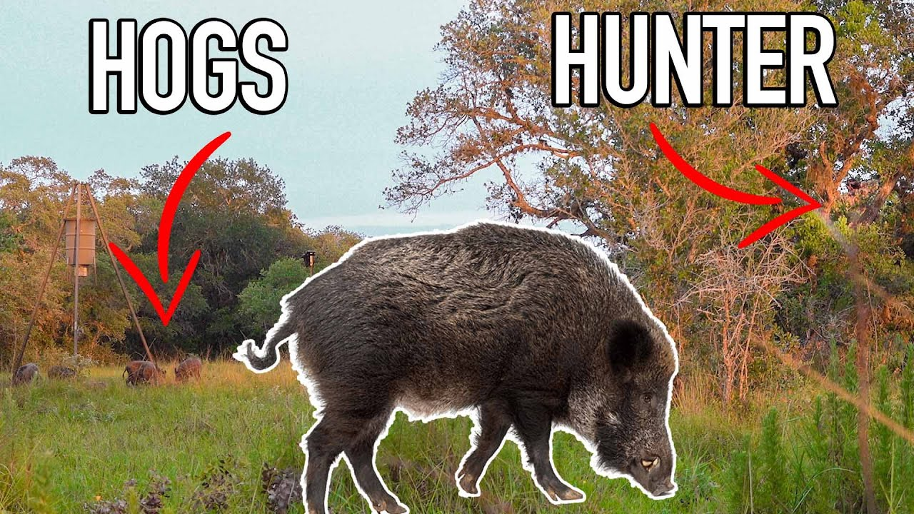 Bowhunting WILD PIGS w/ Ranch Fairy! 🐗 BROADHEAD TESTING!