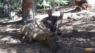 Colorado Archery Elk Hunt - Taking A Nice 6x6 at Eleven Yards; Call