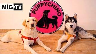 Puppychino Café & Spa | New Delhi
