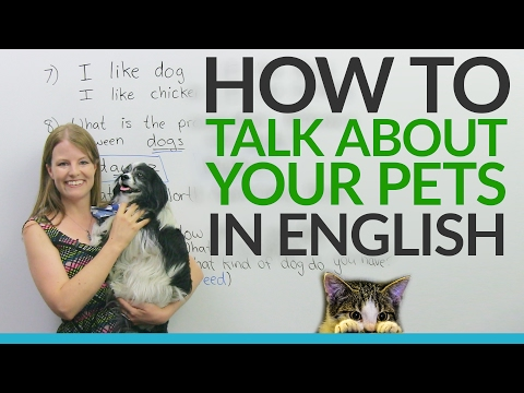 real-english:-talking-about-pets-and-animals