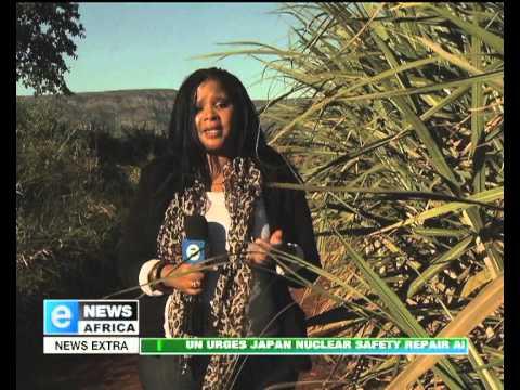 SWAZILAND SUGAR