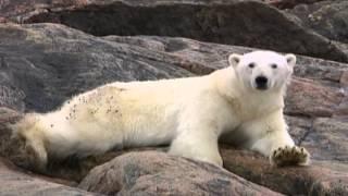 Дневник большого медведя (Big Bear Diary)