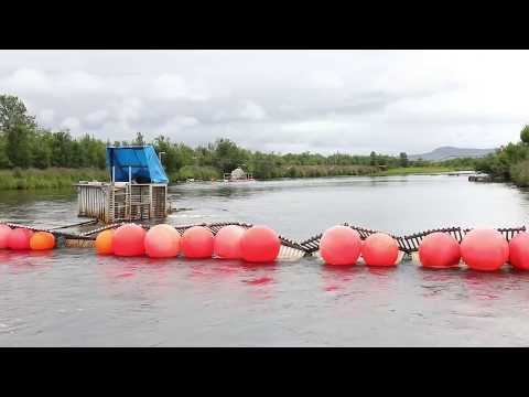 How Does A Fish Weir Work?