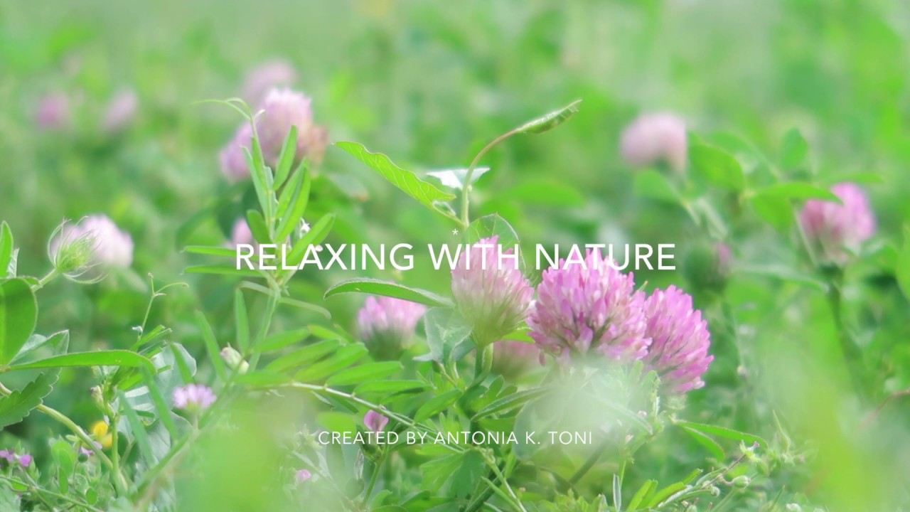 Relax - Reset : Flower gazing (pre meditation)