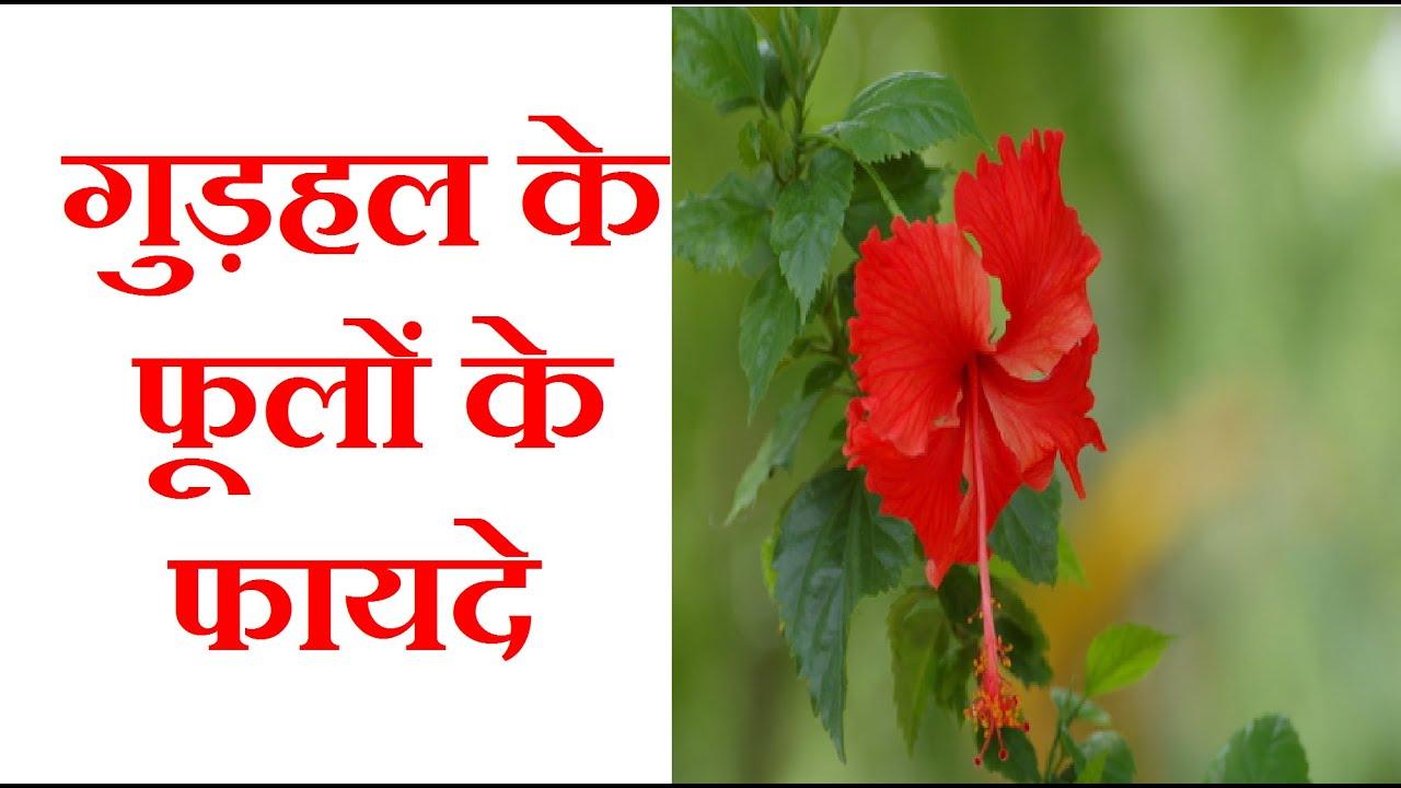 benefits of benefits of hibiscus flower gudhal ke phool youtube izmirmasajfo
