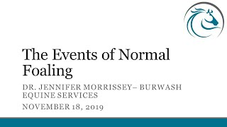 The Events of Normal Foaling