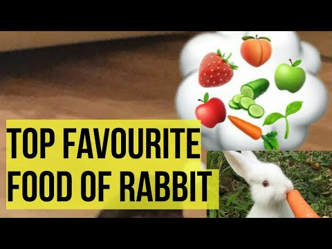 What Do RABBITS EAT  Ten Favourite Food Of Rabbits
