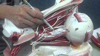 Week 7 PNS lab video, Dr.Kim