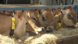 Mastitis Control Plan           George Farm Vets