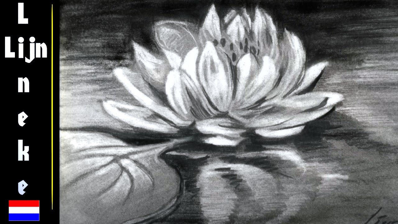 lily-drawings-black-and-white
