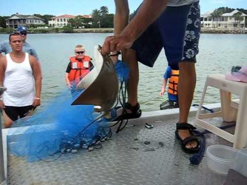 Aqua Safari You Daytona Beach