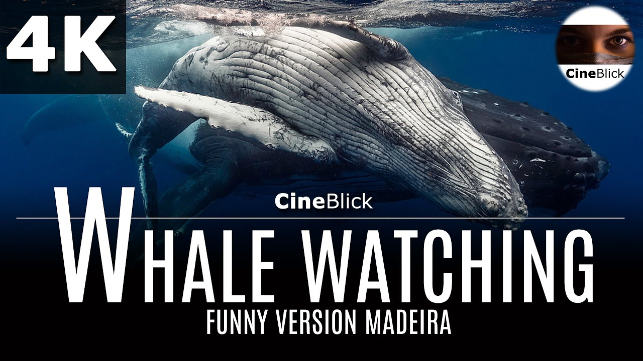 Madeira Whale watching  with funny animals