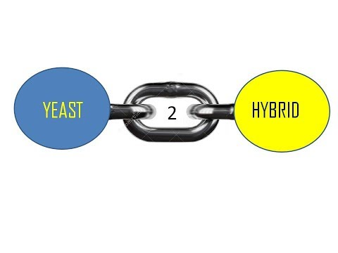 Matchmaker™ Gold Yeast Two-Hybrid System: The Principle from YouTube · Duration:  59 seconds