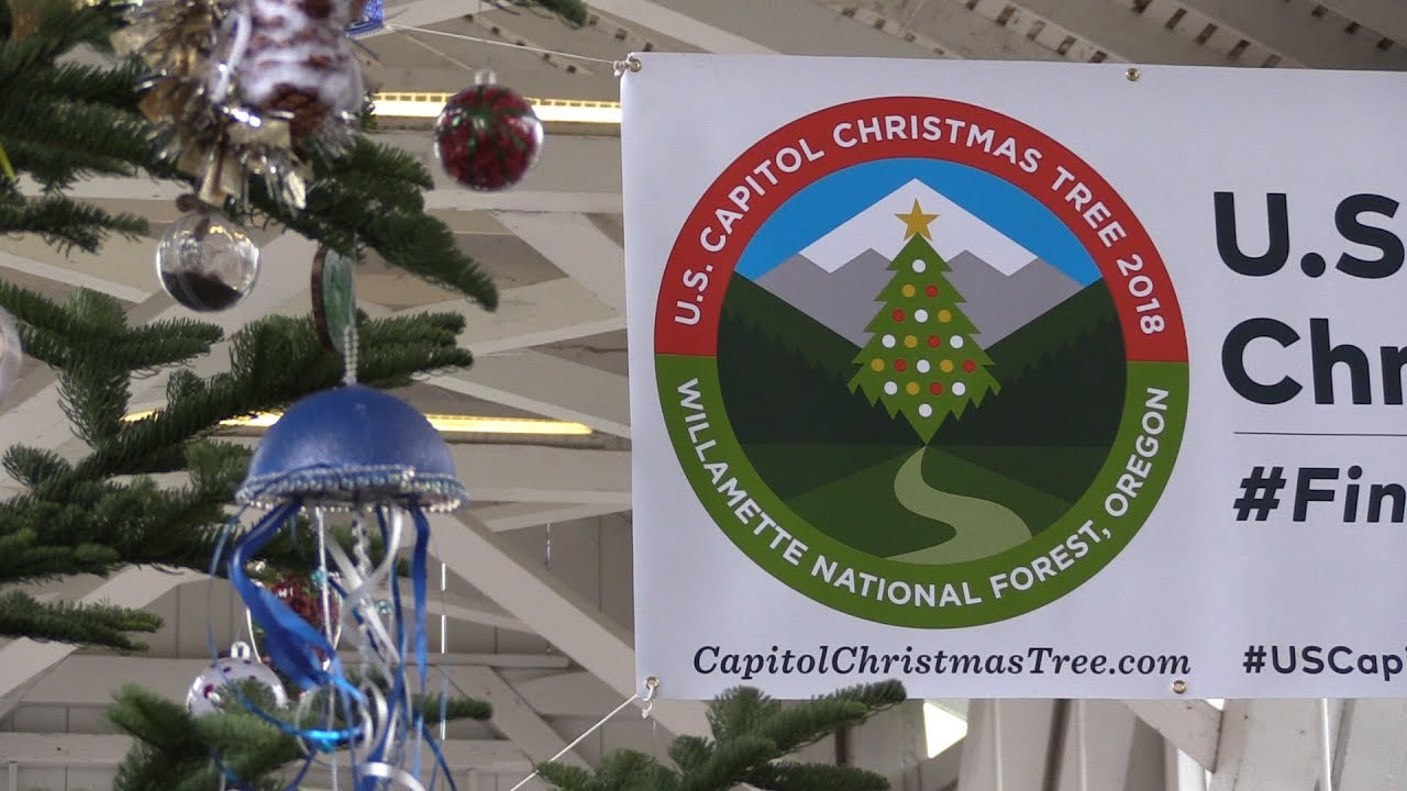Jan. 19, 2020 And Christmas Tree And Sweet Home Oregon Video: Sweet Home Tree for All to See | Albany | democratherald.com